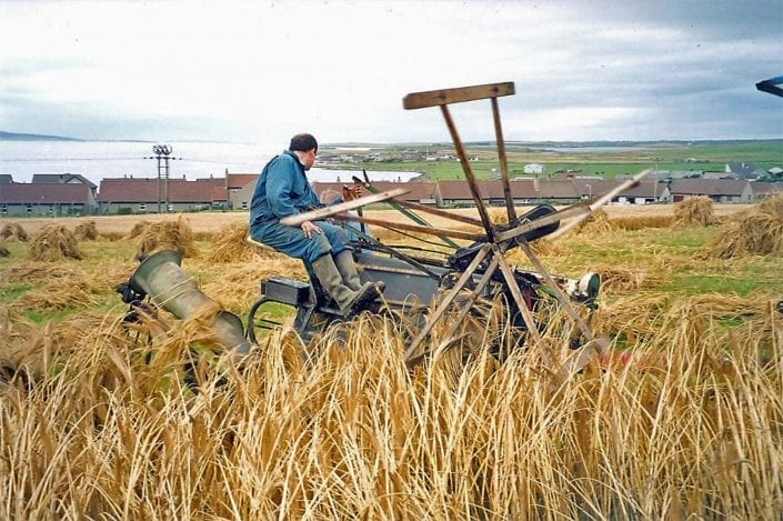 Harvesting Bere in 2002