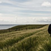 islay single malt farming barley knowledge